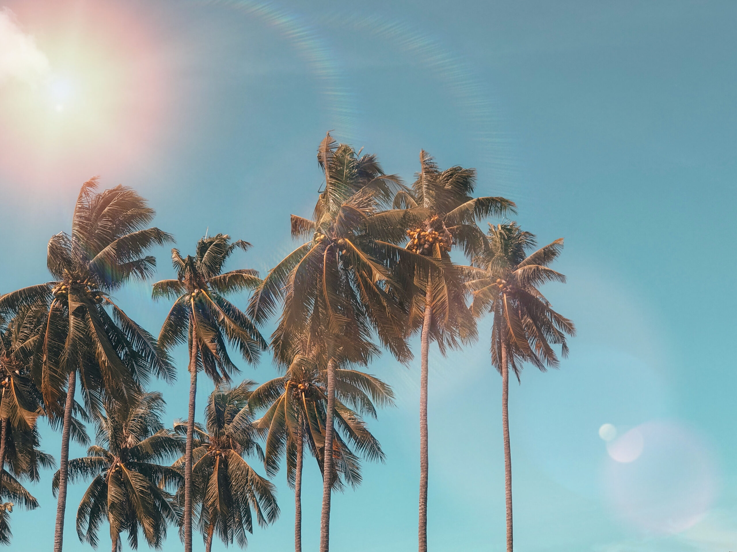 california palm trees and sunshine